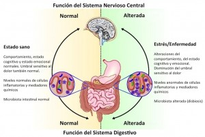 Eje microbiota-intestino-cerebro