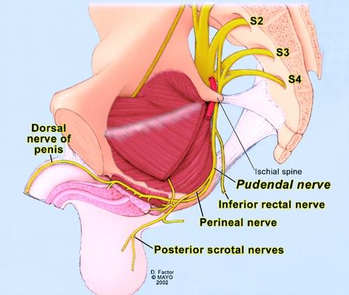 Dolor anal crónico funcional. Proctalgia crónica. | Exploraciones ...